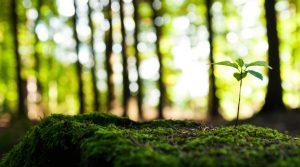 environment-759